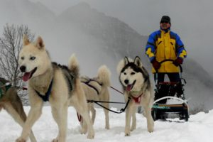 Huskies with sled on Tailor Made Activity Holidays Spain
