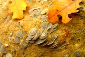 Guided Geology Walks, photo of fossils on Tailor Made Activity Holidays Spain