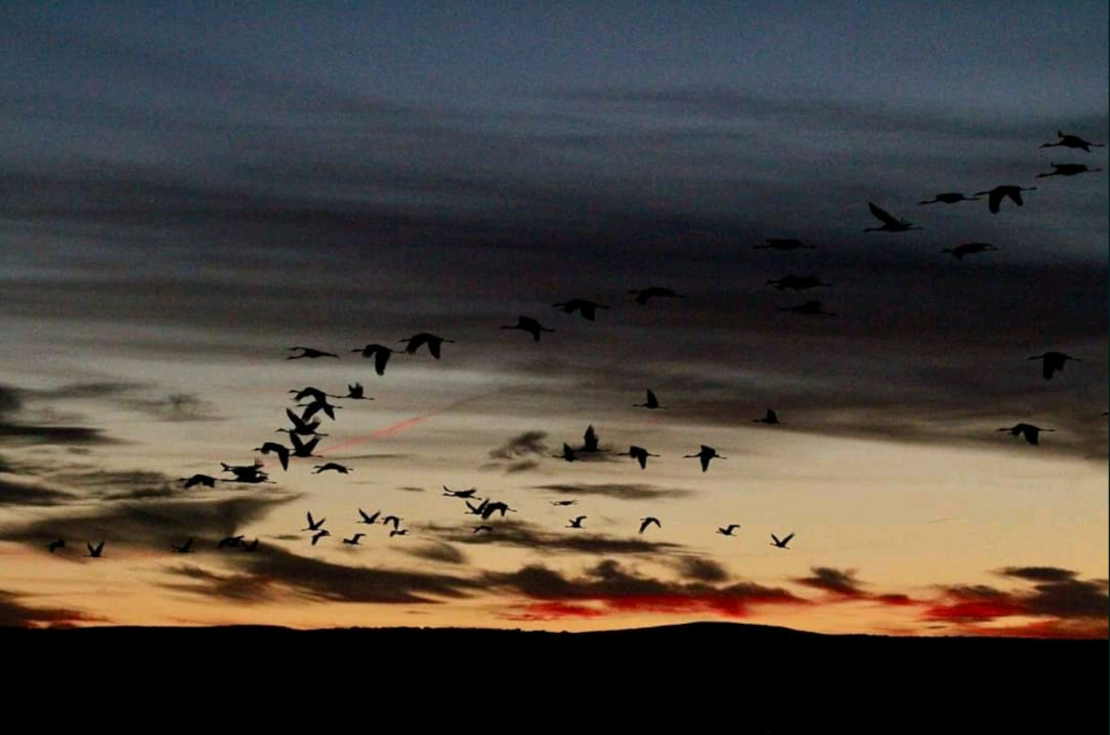 Common cranes take to the air as dawn breaks