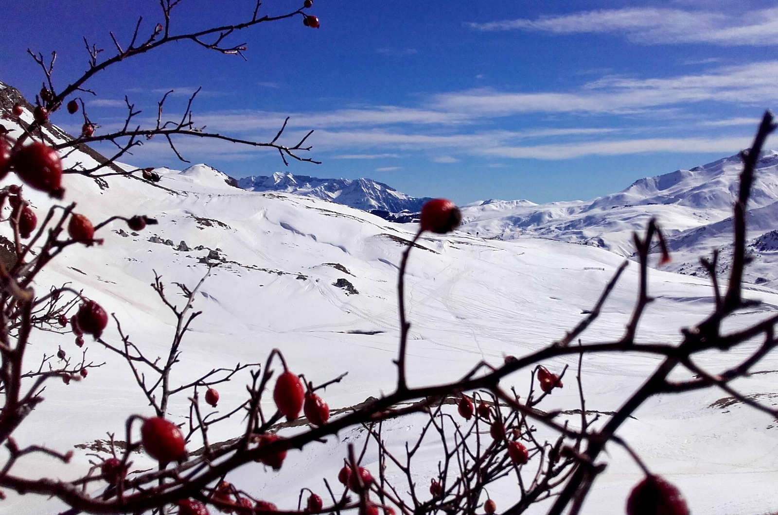 A snow covered mountain landscape with rose hips in the foreground on our Snowshoeing Holidays Pyrenees
