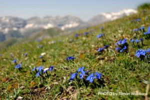 A photo of blue gentians on Nature Photography Holidays