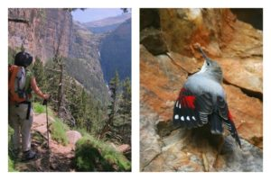 Collage with images of a footpath and a wallcreeper bird on wildlife walking holidays spain
