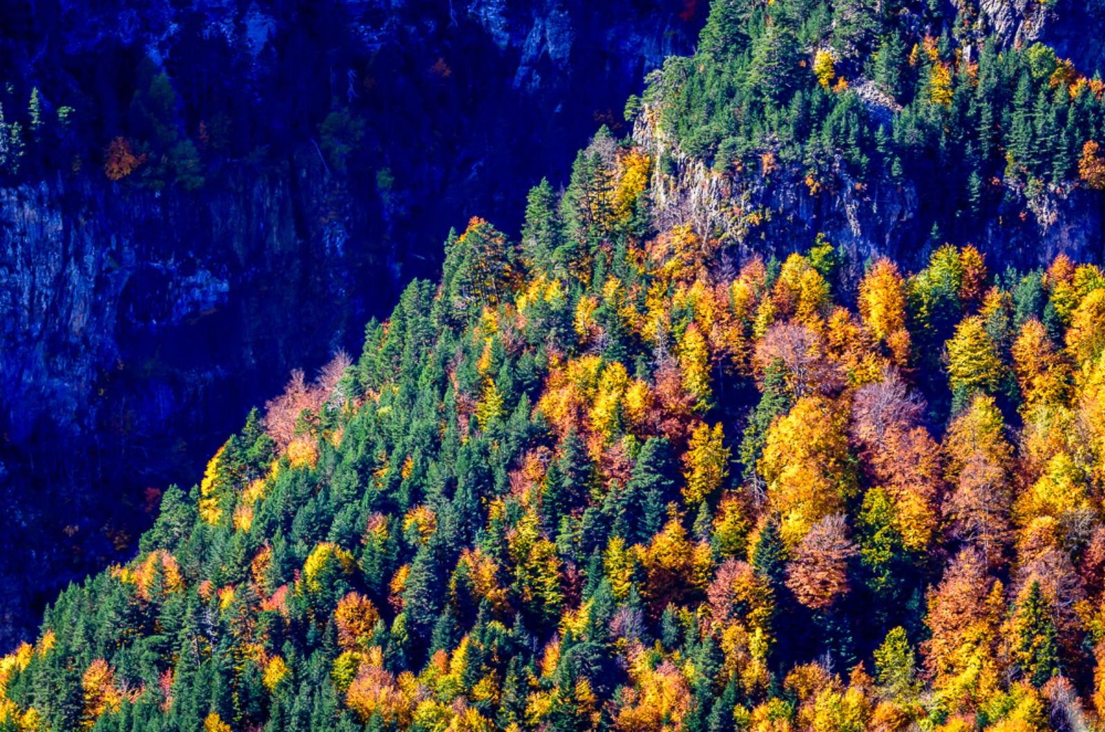 A photo in autumn in the Pyrenees picking out a diagonal line of gold and ochre coloured trees on the Photography Holiday Spain with Aragon Active