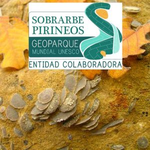 A photo of nummulite fosils in the Sobrabre Geopark supported by Aragon Active Responsible Travel
