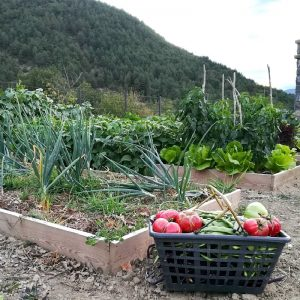 The organic vegetable patch at Casa Allué, Albella, which uses harvested rainwater for irrigation just a part of the Aragon Active recycling ethos and highlighted on their Responsible Travel programme